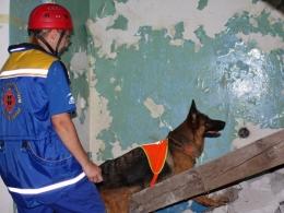 c_260_195_16777215_00_images_uploads_glavnaya_nov-za_sluzhebnye-sobaki-v-polshe.jpg