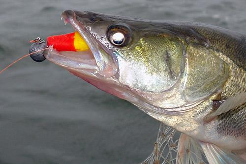 где сейчас хорошо клюет рыба