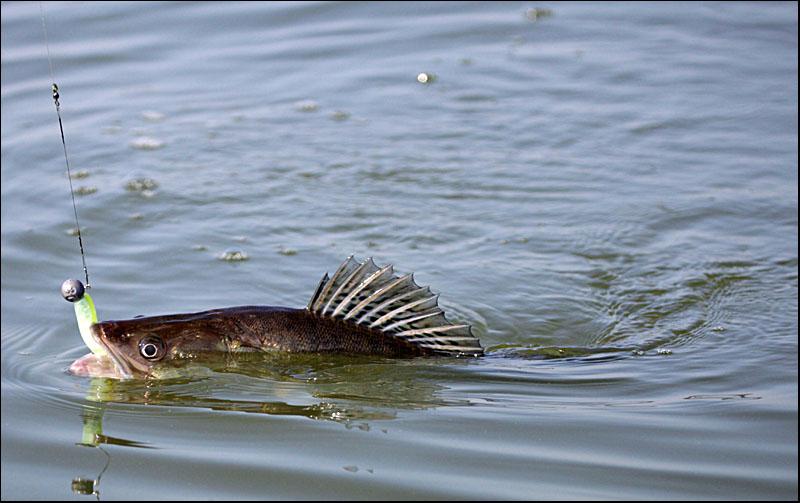 калининградский морской рыболовный