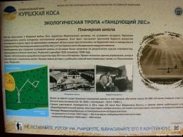 c_260_195_16777215_00_images_uploads_otdyh-kld-obl_kurshskaya-kosa_tancuyushchij-les_1.jpg