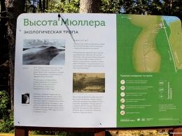 c_260_195_16777215_00_images_uploads_otdyh-kld-obl_kurshskaya-kosa_vysota-myullera_1.jpg