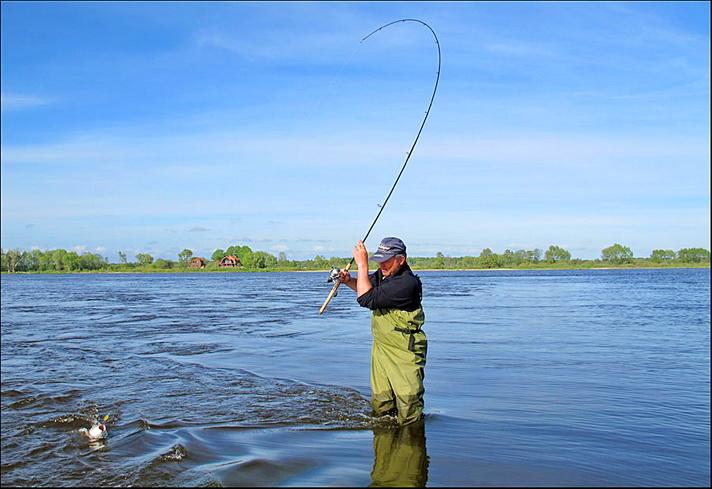 Где в калининграде клюет рыба